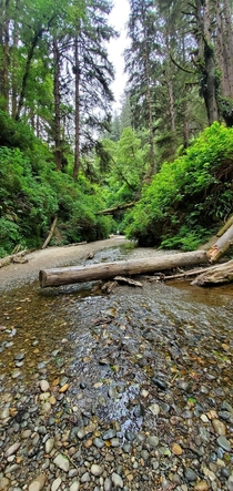 Fern Canyon Humboldt County California