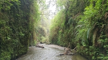 Fern Canyon near Humboldt Park in California