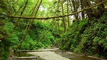 Fern Canyon Northern California