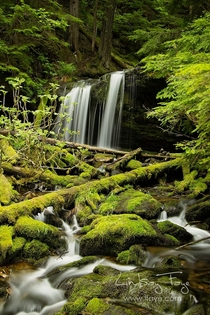Fern Falls Idaho Panhandle National Forests