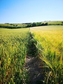 Fields at the foot of the South downs East Sussex UK  x