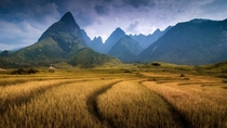 Fields near Mt Fansipan Vietnam  by Por Pathompat