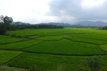 Fields of Green  Rice Paddies in Vietnam
