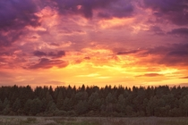 Fiery sunset over forest Dzerzhinsk Belarus