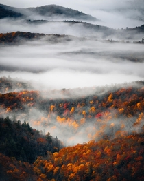 Final pop of fall colors revealing themselves as the fog lifts on the Blue Ridge Parkway North Carolina
