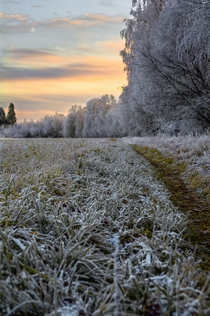 Finally the cold is starting to sneak in Pedersre Finland