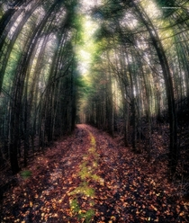 Find Your Own Path - Pittsburg New Hampshire USA