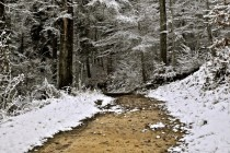 First Snow in Bienne Forest Switzerland