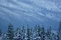 First snow in Mt Baker-Snoqualmie National Forest WA
