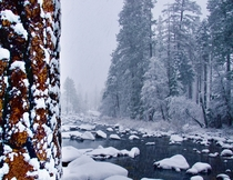 First Snow Merced River Nov  Yosemite   X