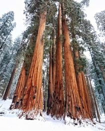 First time in Sequoia National Park CA  IG Andrew_Calder