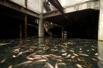 Fish Swim Through Abandoned Bangkok Shopping Mall Image by Jesse Rockwell
