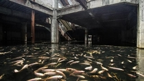 Fish Taking Over Abandoned Mall in Bangkok