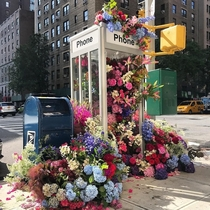 Flower Flash in NYC by Lewis Miller design
