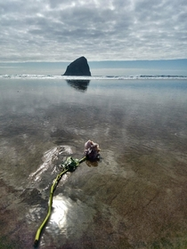 Flower washed up on the beach for fisherman lost at sea today Cape Kiwanda Oregon-