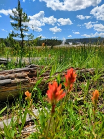 Flowers still bloom among these Yellowstone geysers