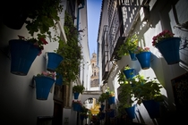 Flowers Street in Cordoba Spain