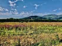 Flowery field in Tuscany near the mount Serra Lucca Italy