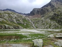 Flowery pond up high Magdeburger Htte South Tyrol Italy
