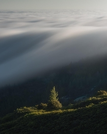 Fog flowing over Mt Tamalpais during golden hour