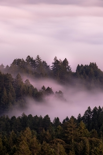 Fog is stuck between the trees of Mill Valley North of San Francisco in California