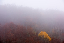 Fog shrouds the fall colors at Omberg Sweden