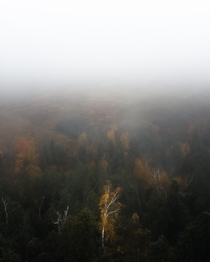 Foggy fall days Mount Nemo Burlington Ontario Canada -  Instagram shredeye