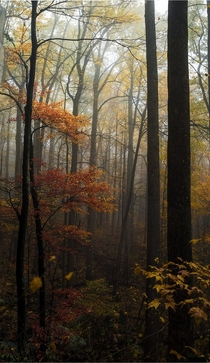 Foggy Fall In the Woods of Shenandoah