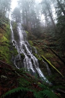 Foggy Falls - Randle Washington