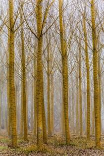 Foggy forest in Palencia Spain  OC
