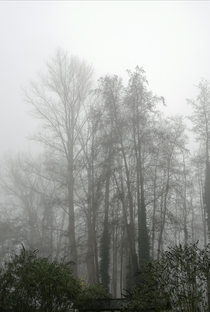 Foggy forest on a winter morning shot from my garden in lower Saxony Germany