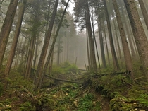 Foggy Forest Vancouver BC  X