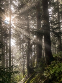Foggy forests not long after sunrise make the early hike worth it Taken near Skykomish WA  IGhikedailyprn