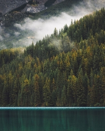 Foggy lakeside in the Canadian Rockies