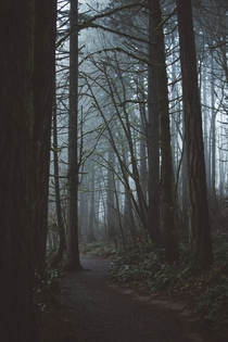 Foggy mornings in Bryant Woods OR