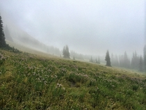 Foggy mountain meadow in the Northern Cascades WA