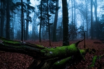 Foggy November day in a Swiss forest Switzerland