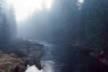 Foggy river in Alaskas rainforest