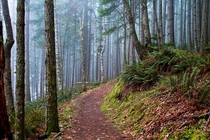 foggy Suncoaster Trail Canadax-post rfoggypics photo by Peggy Collins