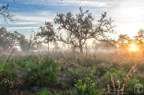 Foggy sunrise at Split Oak Forest in SE Orlando Florida