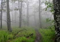 Foggy trail in Shenandoah National Park Virginia