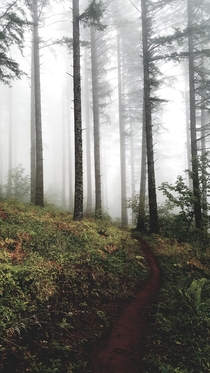 Foggy trail in the McDonald-Dunn Forest Oregon