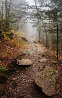 Fogs sets in on the Appalachian Trail - Great Smoky Mountains National Park TN