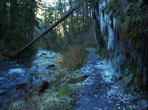 Footlong icicles line the trail at Silver Falls State Park OR