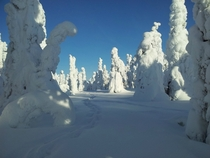 Footsteps in the snow Posio Finland