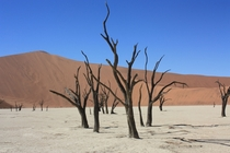 For a place called Dead Vlei Namibia I think its beautiful