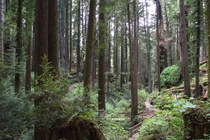 For a small town community park with over  acres of park and trails in a Redwood grove Arcata Community Forrest NEVER gets old