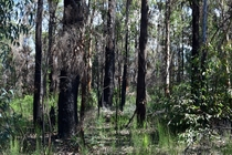 For something completely different heres  months of regrowth after bush fires in the Blue Mountains Australia
