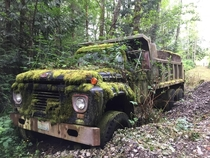 Ford dump truck becoming part of the forest Outside Bellingham Washington