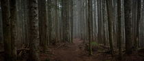 Foreboding Forest on Larch Mountain Oregon